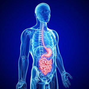 Атония пищевода и кишечника