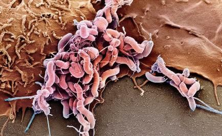 патогены