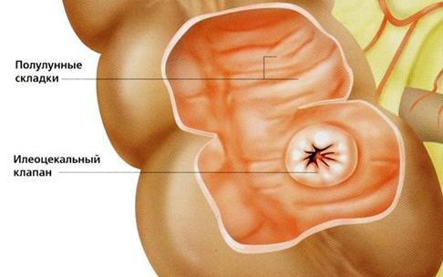 илеоцекальный клапан