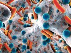 Пребиотики как важная часть микрофлоры кишечника: перечень популярных препаратов и продуктов