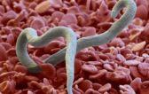 Как выявить и вылечить аскаридоз у взрослых?