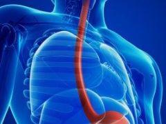 Пищевод человека: особенности строения и выполняемые функции