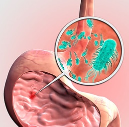 Как передается бактерия хеликобактер