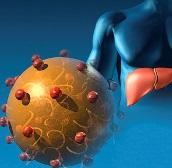 причины возникновения аутоиммунного гепатита