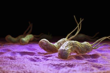 хеликобактерии