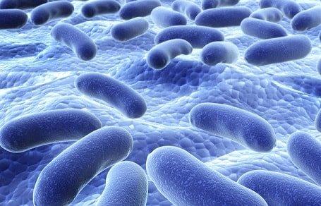 хорошие бактерии